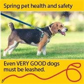Spring pet health and safety:  Even very good dogs must be leashed.