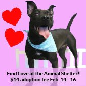 Adorable Shelter dog smiles at you, surrounded by hearts. Find Love at the Animal Shelter!  $14 adoption fee February 14 through 16.