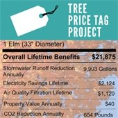 Tree Price Tag Project