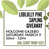 Loblolly Pine Sapling Giveaway