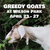 Greedy Goats at Wilson Park April 23 through 27