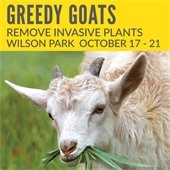 Greedy Goats in Wilson Park
