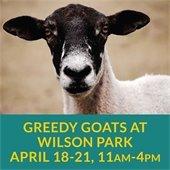 Greedy Goats at Wilson Park