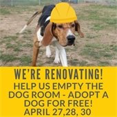 No Fee Dog Adoptions