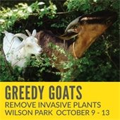 Greedy Goats Remove Invasive Species