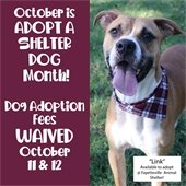 October is Adopt a Shelter Dog Month! Dog Adoption Fees Waived October 11 & 12