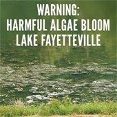 WARNING: Harmful Algae Bloom Lake Fayetteville