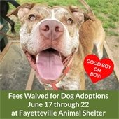Fees waived for dog adoptions June 17 - 22, Fayettteville Animal Shelter