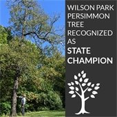 Wilson Park persimmon tree recognized as State Champion