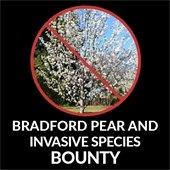 Bradford Pear and Invasive Species Bounty