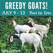 Greedy Goats July 2019
