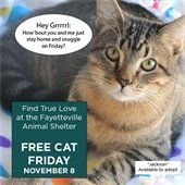 Find True Love at the Fayetteville Animal Shelter: Free Cat Friday, Nov. 8.