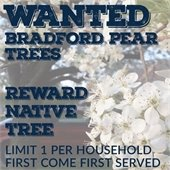 Wanted: Bradford Pear Trees: Reward: Native Tree