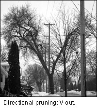 V shaped directional pruning image