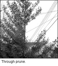 Through prune image