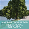 Lake Fayetteville Dam Tree Removal
