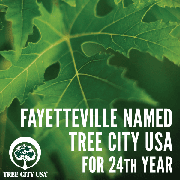 Fayetteville Named Tree City USA