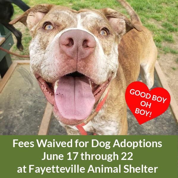 Fees waived for dog adoptions June 17 - 22 at Fayetteville Animal Shelter