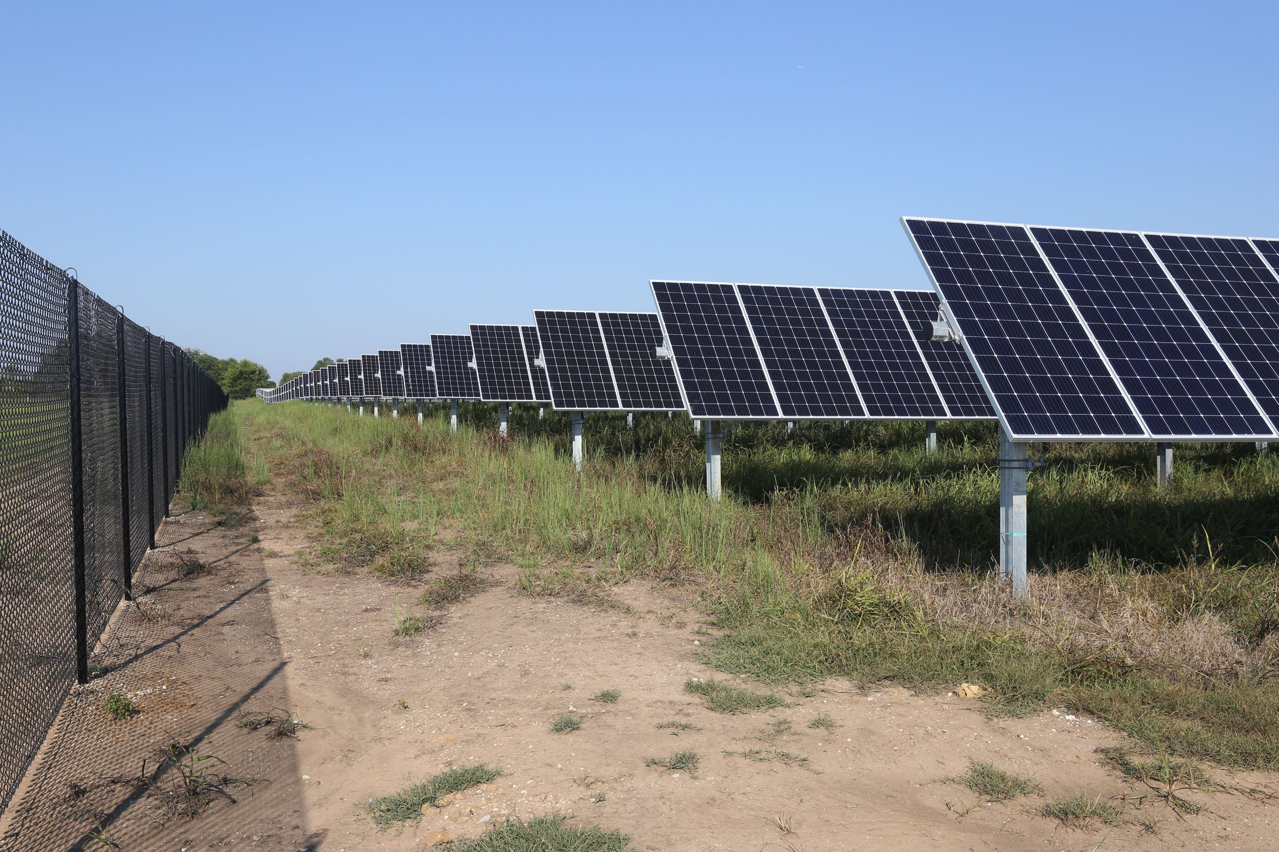 Image of long rows of solar panels