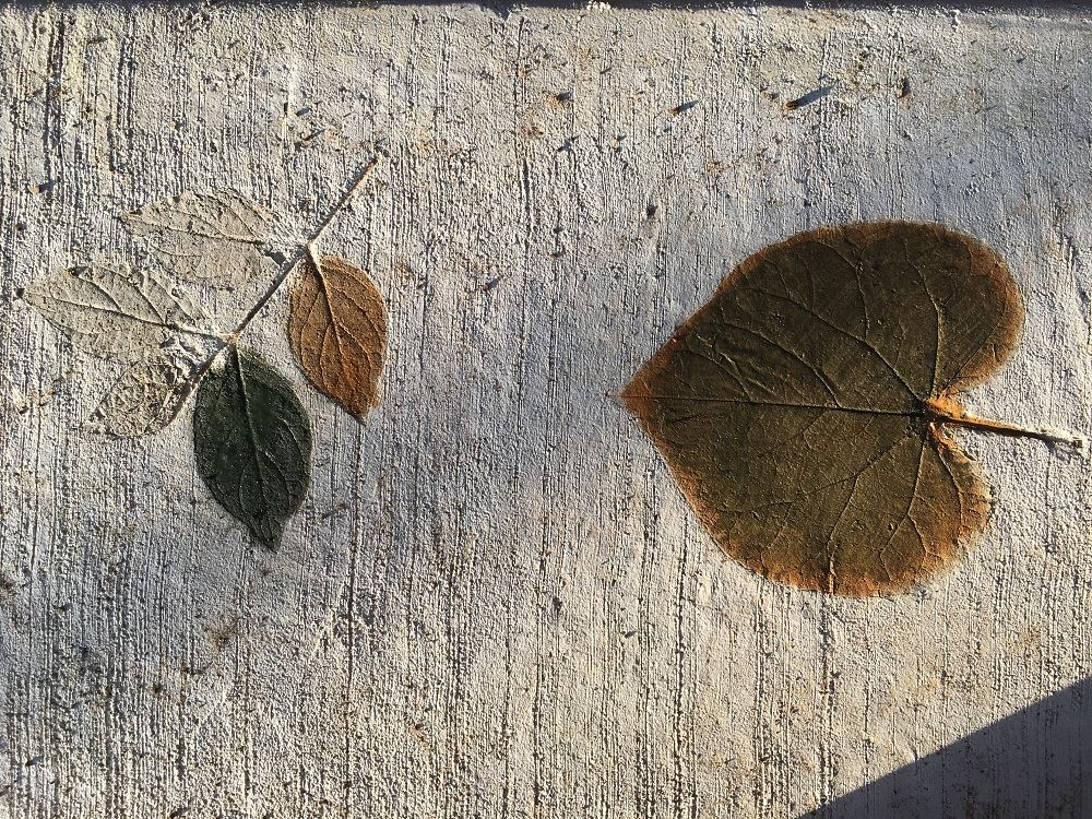 Photo of leaves pressed into the concrete walkway at Gregory Park