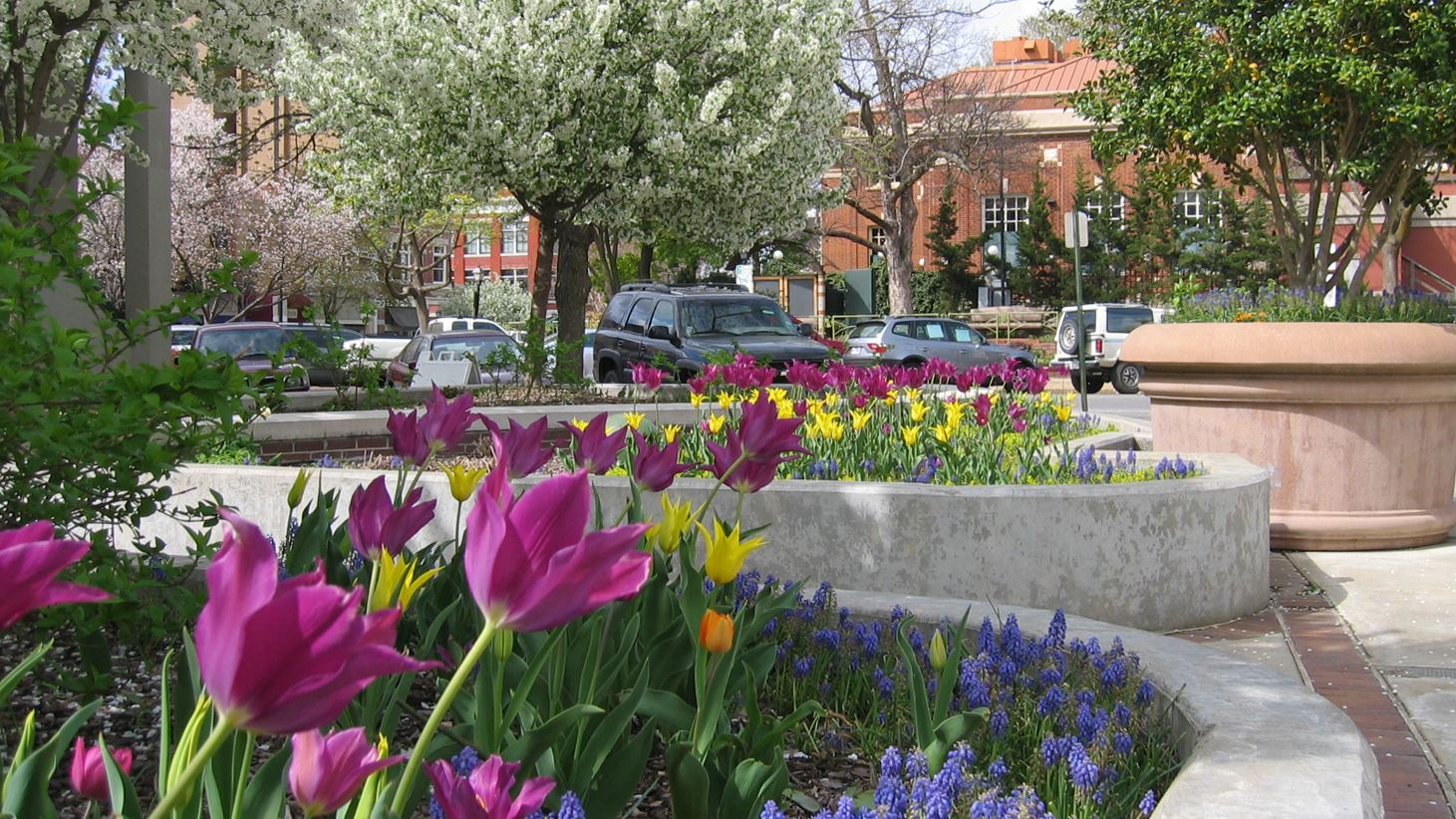 spring blooms on the Fayetteville Square