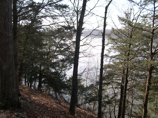 Trees and a hill slope down to Lake Sequoyah