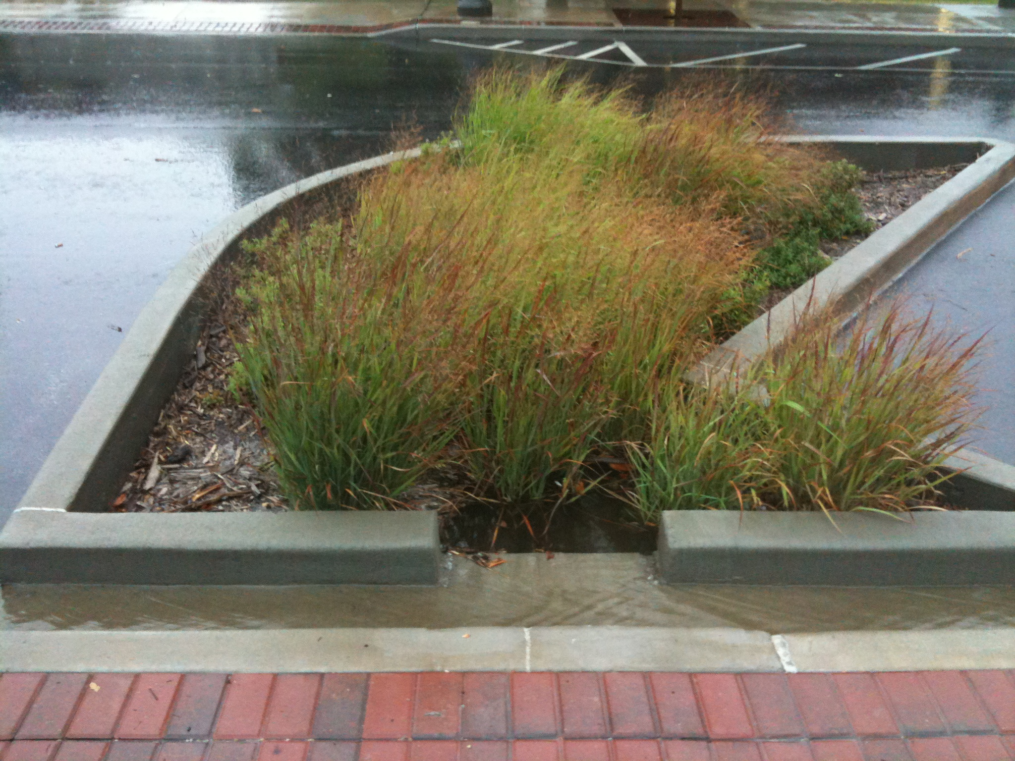 bioswale on block avenue during a rain event